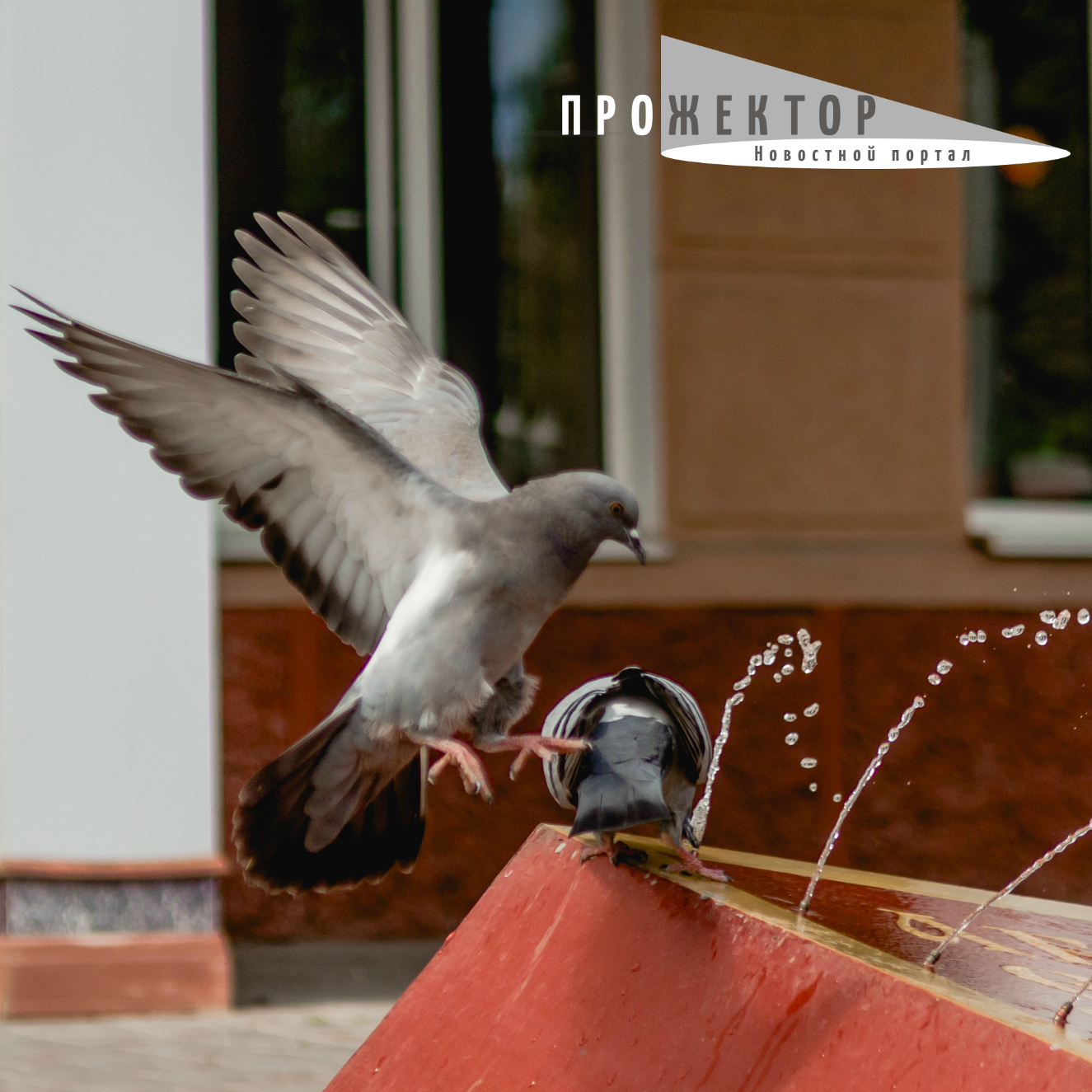 Почему в Астрахани массово гибнут голуби: мнение орнитолога