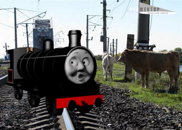 Астраханские коровы угрожают жизни пассажиров поездов