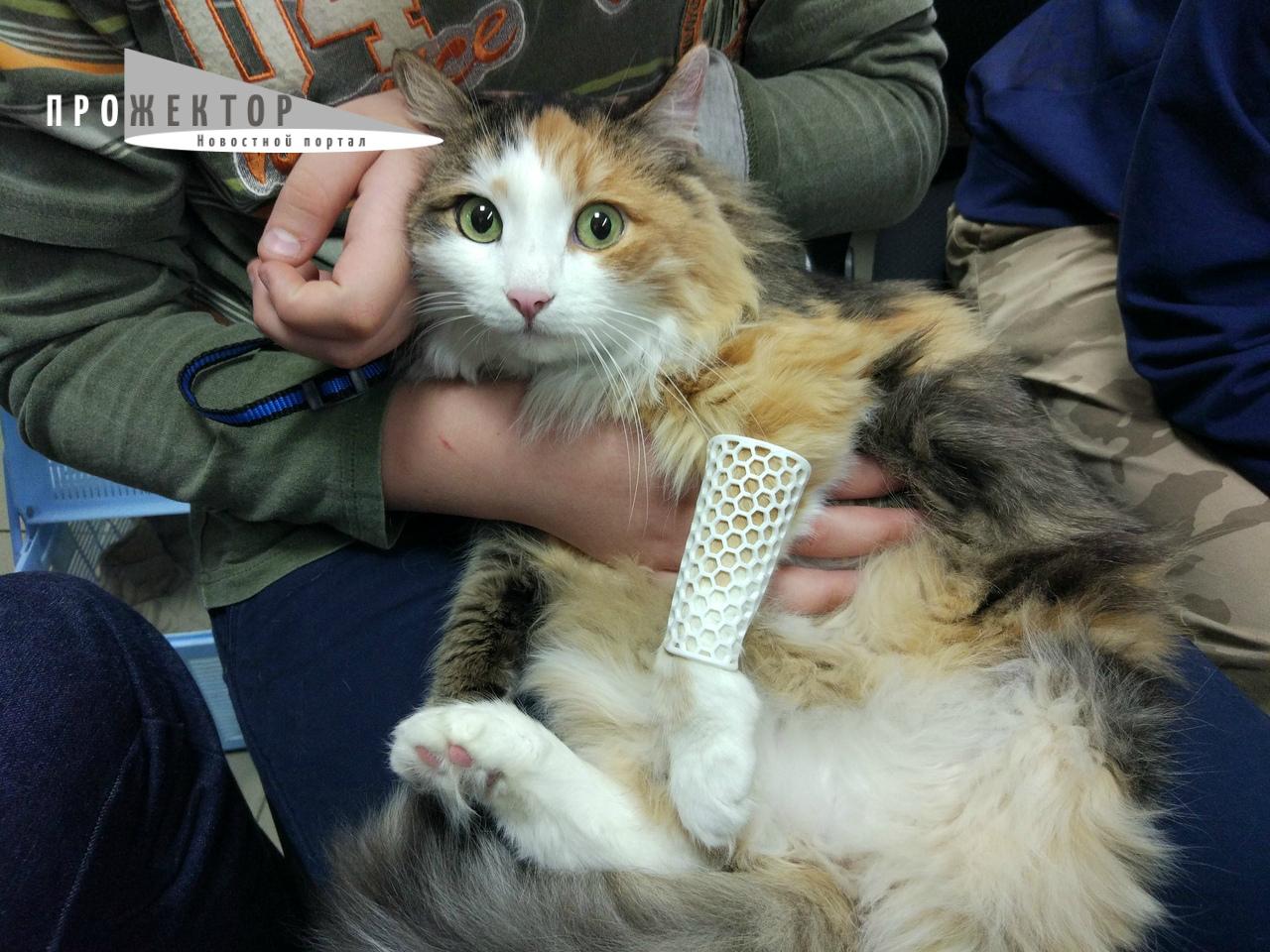 Астраханка придумала «умные» лонгеты для котиков и не только