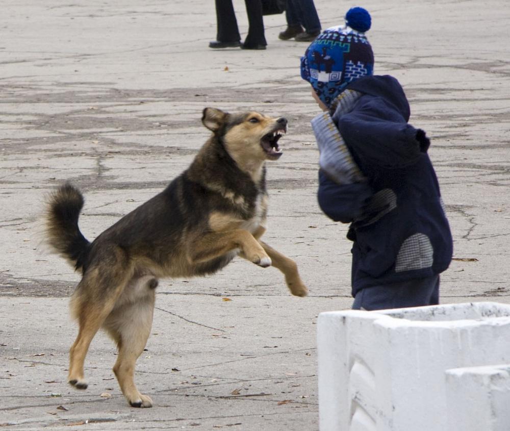 У девочки рваные раны лица: в Астраханской области собака напала на ребёнка