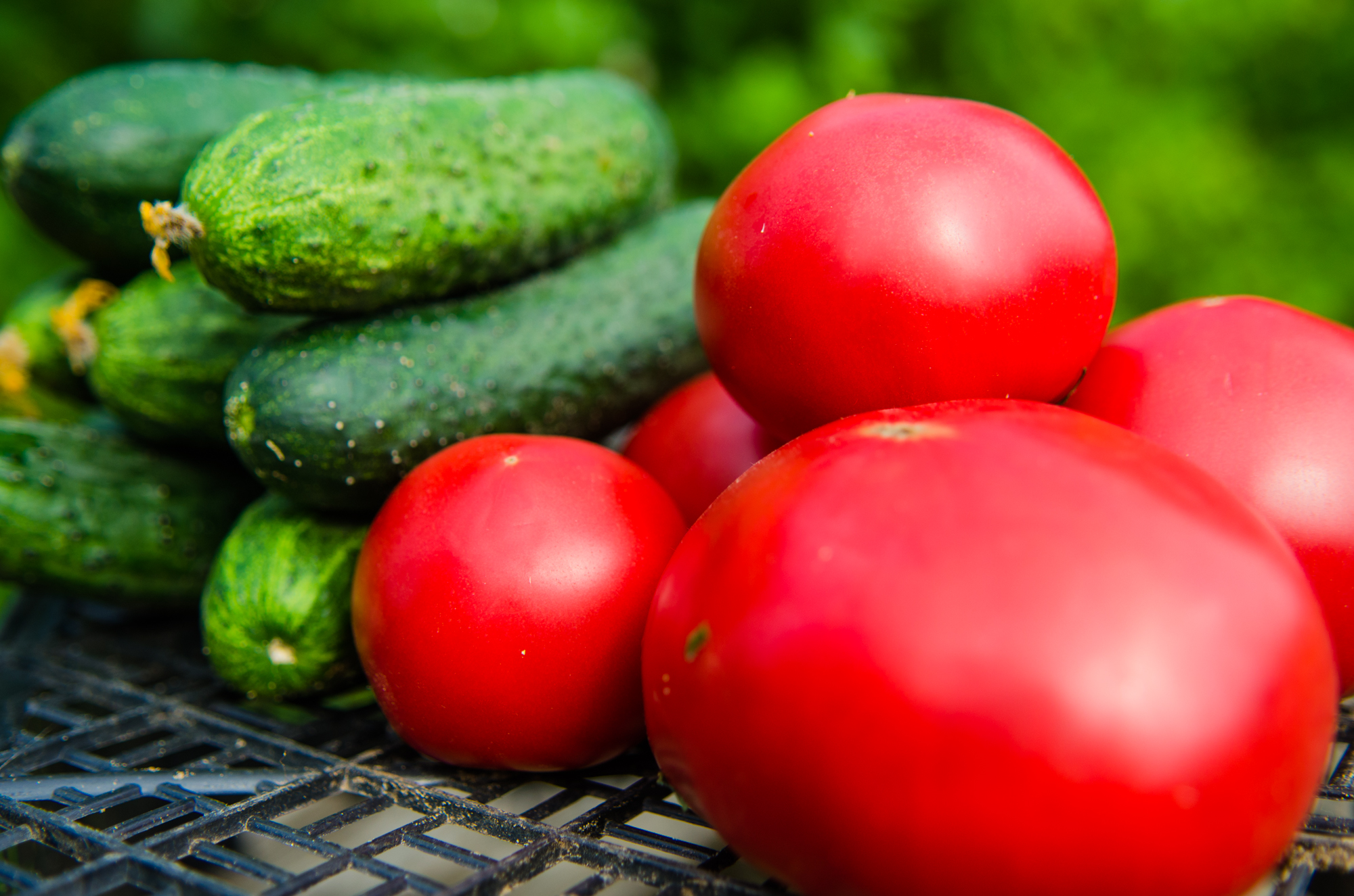 Астраханская томатная паста может отправиться в Японию и Африку