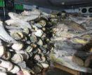 16 тонн краснокнижной рыбы изъяли в Астраханской области