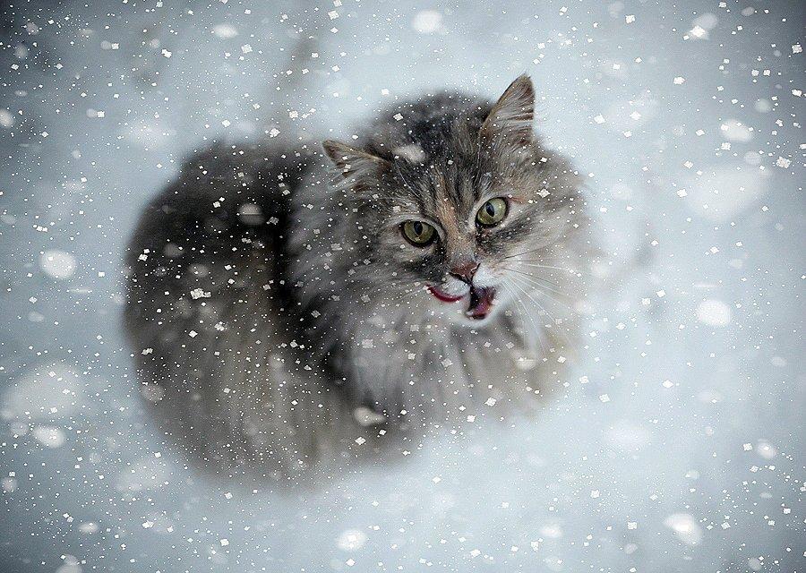 Зима не кончилась: погода порадует астраханцев снегом