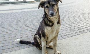 Сергей Мансуров предложил отдать бездомных животных на содержание зоозащитникам