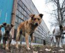 120 млн рублей потратят астраханские власти на решение проблемы с бродячими животными