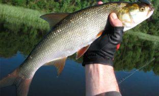 Астраханец продавал 36 тонн немаркированной рыбы