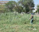 Астраханские улицы чистят от сорняка