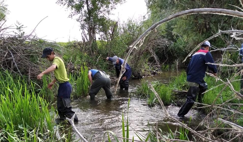 В Астраханской области спасено более 34 млн штук молоди ценных видов рыб