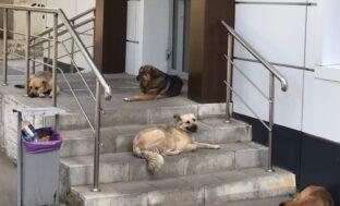 В Астрахани появится ещё один приют для бездомных животных