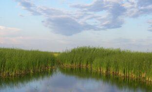 На прошлой неделе в Астраханской области были созданы два заповедника