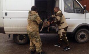 В Астрахани отлавливают бездомных собак