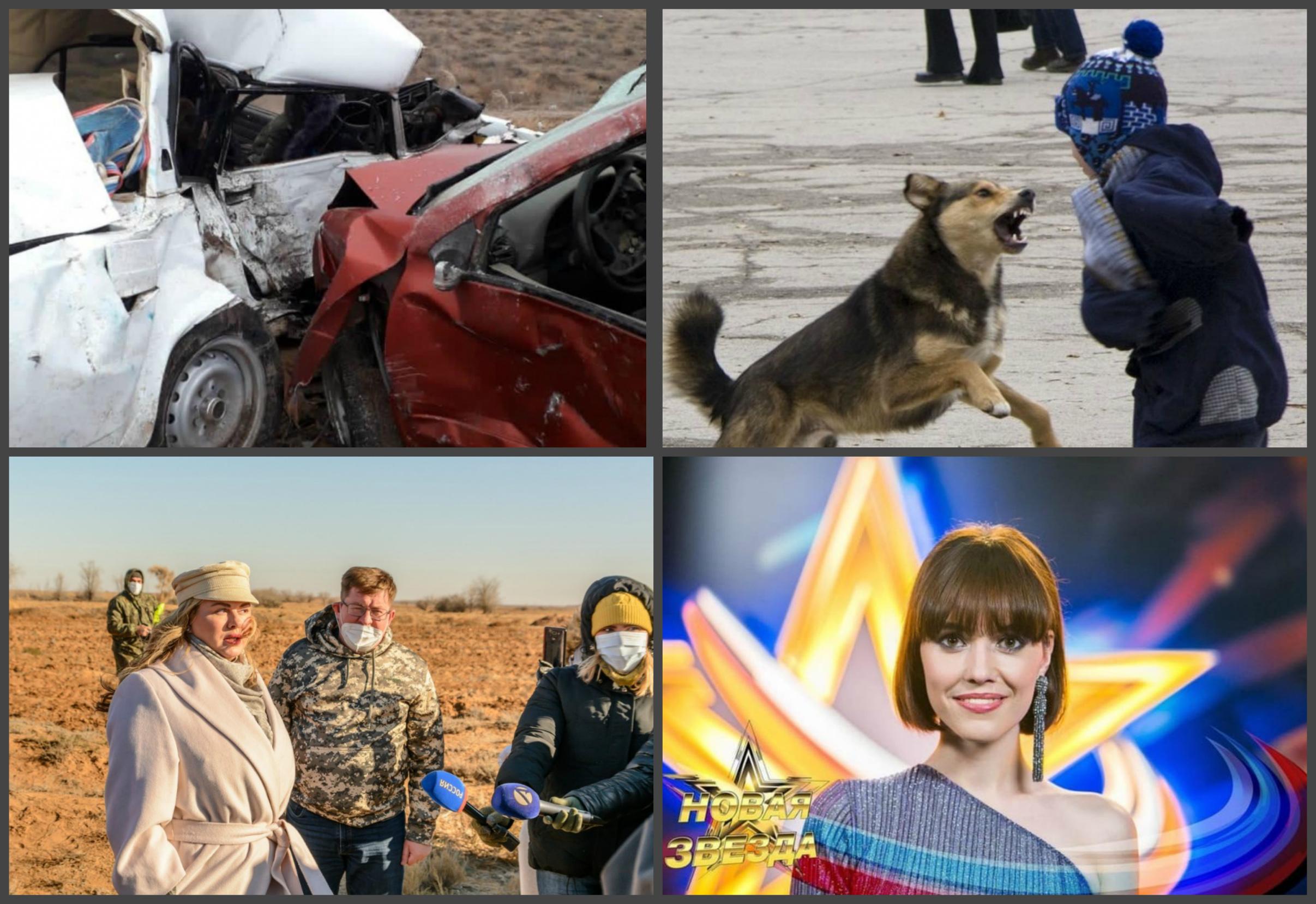 Первый снег, массовые аварии, собаки и звёздные гости: неделя в свете «Прожектора»