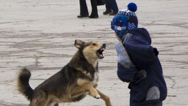 Астраханцы создали петицию и просят разрешить усыпление бродячих собак