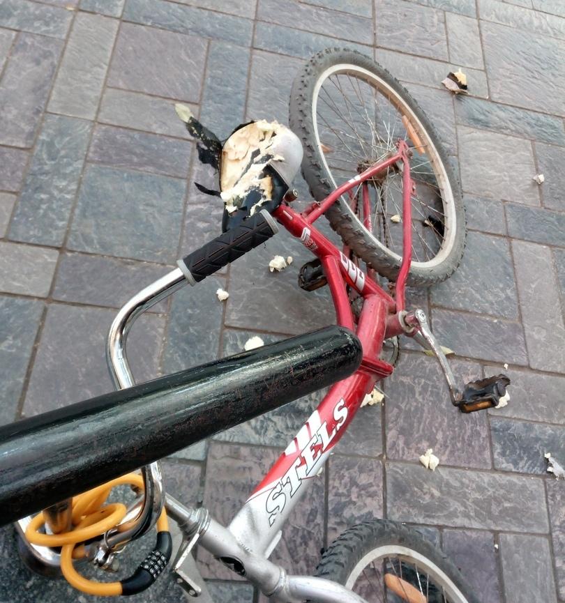 Бездомные собаки погрызли припаркованный велосипед в Астрахани