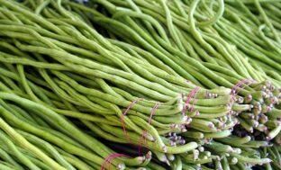 В Астраханской области начнут выращивать вигну